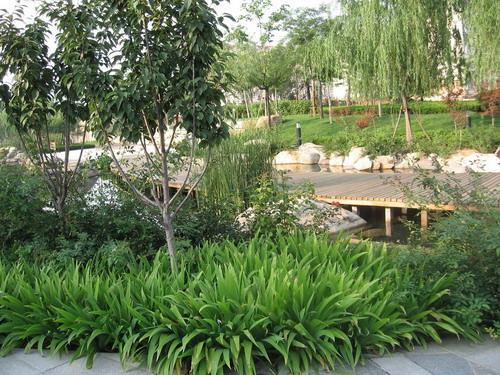 青岛市城阳区景观大道——重庆风景园林网 重庆市风景
