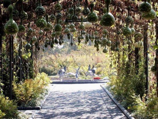 美国密苏里植物园