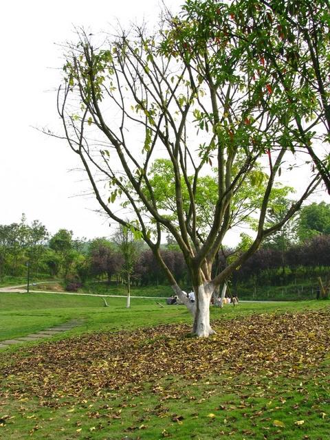 重庆大学虎溪校区——重庆风景园林网 重庆市风景园林