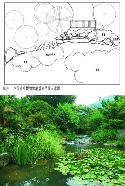 景观丛植手绘平面