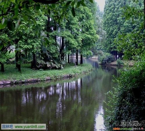 上海共青国家森林公园赏析