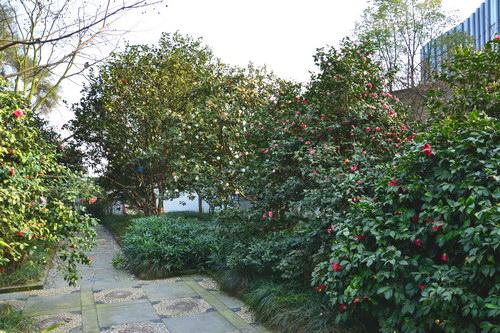 重庆市风景园林学会联合重庆南山植物园集中举办家庭养花知识宣传服