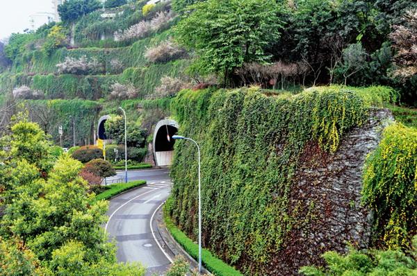 立体绿化植物景观设计分析 以重庆嘉华大桥隧道口立体绿化为例