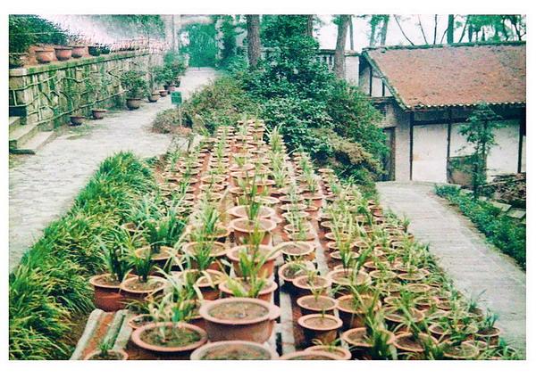 重庆市南山植物园兰园与兰花