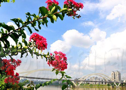 昨天,蓝天白云下,红花碧水间的柳州格外美丽
