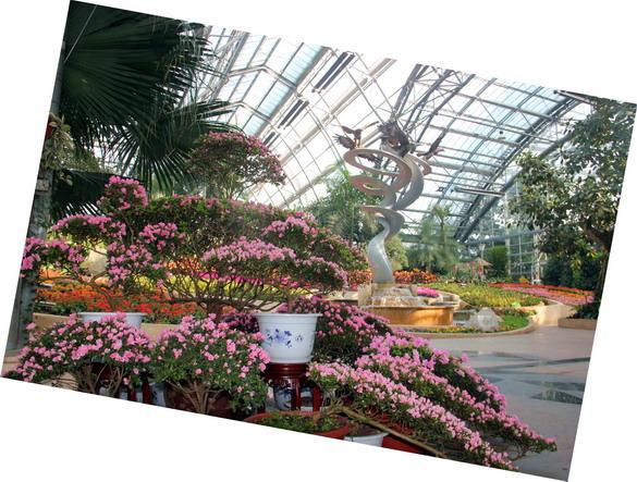 重庆南山植物园举办第二届丹东杜鹃花展