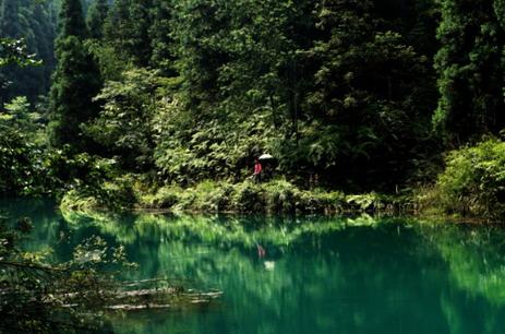 重庆梁平动物森林大会