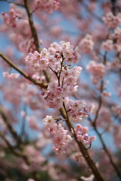 春天的南山植物园——重庆风景园林网 重庆市风景园林