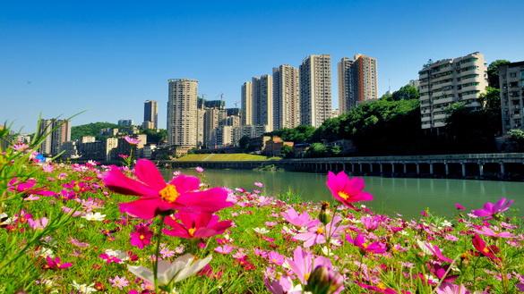 重庆綦江:美丽格桑花背后的思索