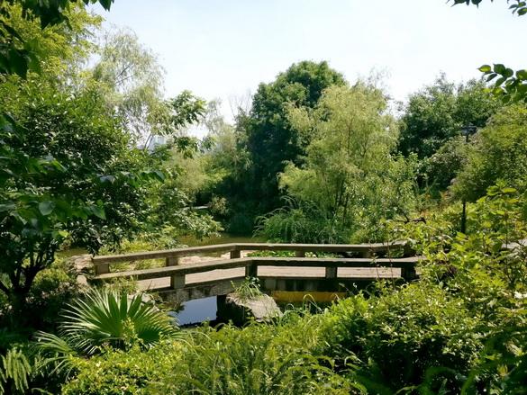 重庆照母山森林公园之夏